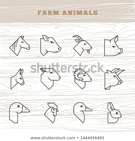 Stock photo: Sheep and ram. Farm animals linear symbol