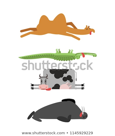 Dead animals set 4. Camel and crocodile. Cow and walrus. animal  Stock photo © popaukropa