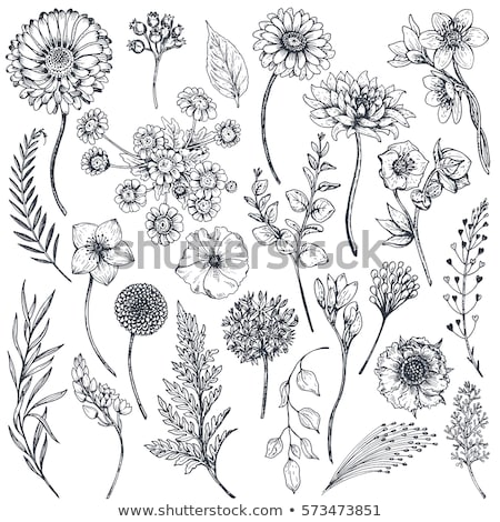 floral background with hand drawn chamomiles flowers stock photo © margolana