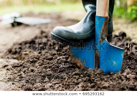Farmyard with vegetable garden Stock photo © colematt
