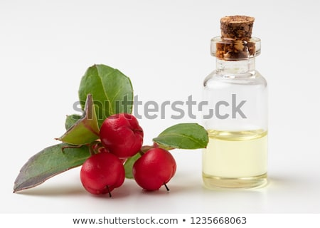 A bottle of wintergreen essential oil with wintergreen berries on a white background Stock photo © madeleine_steinbach