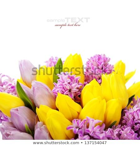 весенний цветок плакат текста образец изолированный баннер Сток-фото © robuart
