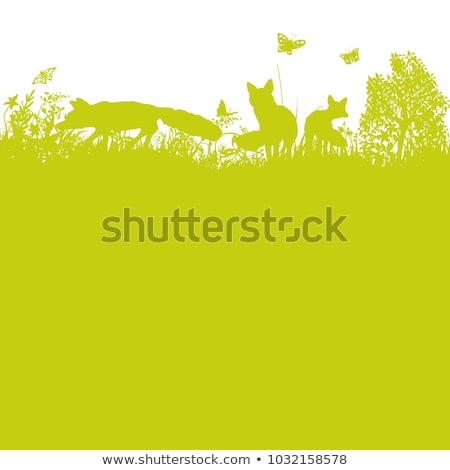 Three foxes in the garden on a green meadow Stock photo © Ustofre9
