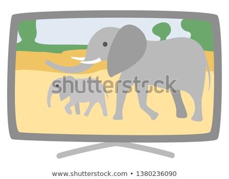 plasma broad tv set vector elephants on screen stock photo © robuart