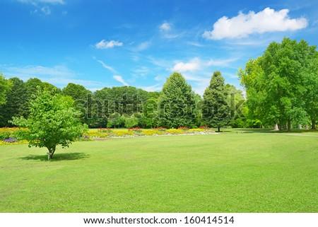 Springtime - Forest Green Grass And Blue Sky Stock photo © Serg64