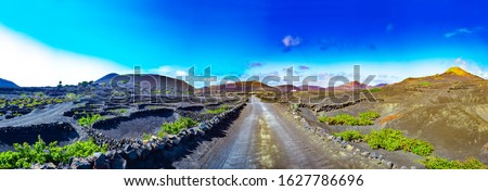vineyard in Lanzarote island, growing on volcanic soil  Stock photo © meinzahn