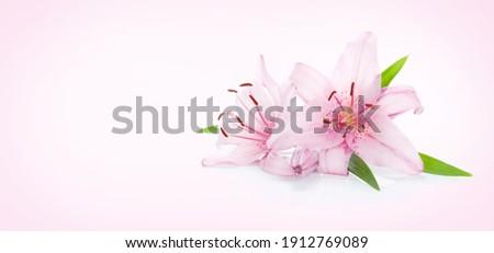 Espace de copie espace de copie ordinateur fleur texture Photo stock © PokerMan