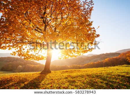 majestic trees with sunny beams at mountain valley location pla stock photo © leonidtit