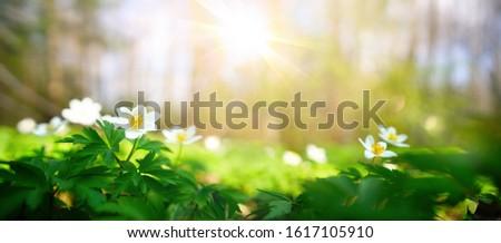 Primavera sol luz hierba suelo pradera Foto stock © romvo