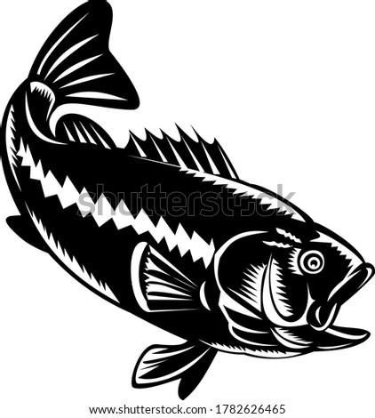 бас дайвинг вниз черно белые ретро иллюстрация Сток-фото © patrimonio