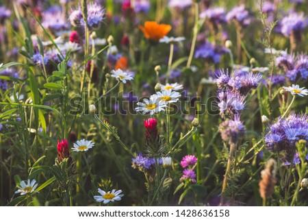 красивой Полевые цветы луговой весны любви природы Сток-фото © meinzahn