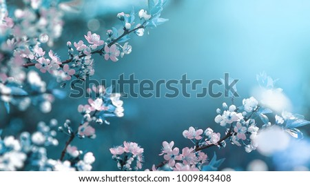 spring blossoming sakura flowers on the blue sky background stock photo © maxpro