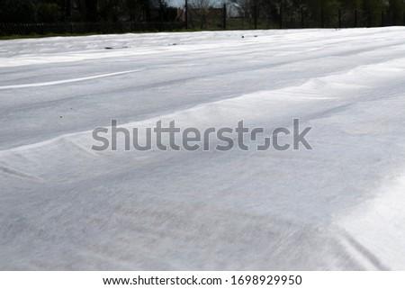 Plastic tarp on arable Stock photo © w20er
