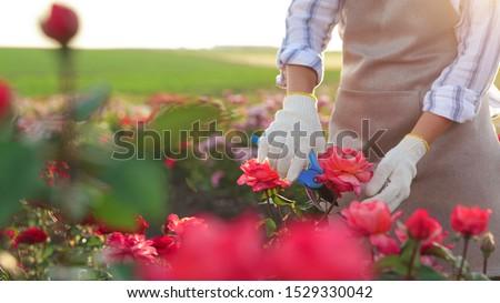 美人 植物 庭園 幸せ 自然 ストックフォト © wavebreak_media