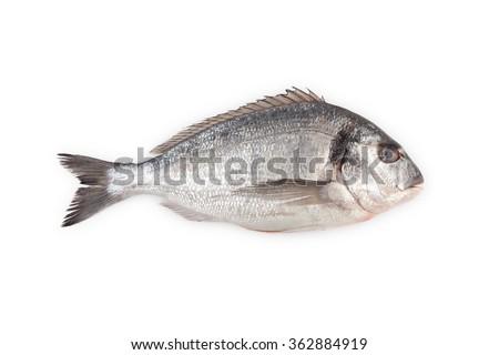 Tenger hal kék tányér fehér friss Stock fotó © Alex9500