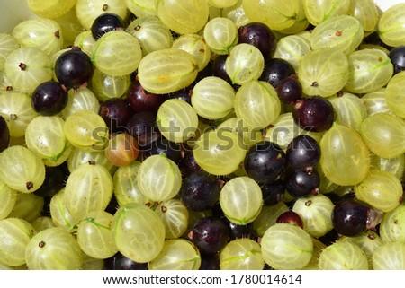 Some blackcurrants Stock photo © digitalr