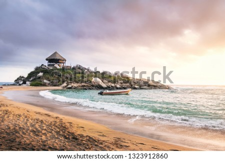 Palm tree forest in Tayrona Natural National Park, Colombia Stock photo © boggy
