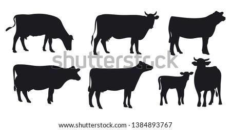 mucca · mangiare · rosolare · erba · prato · faccia - foto d'archivio © Elenarts