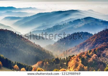 秋 · 落葉性の · 森林 · 美しい · 木 · トランクス - ストックフォト © kotenko