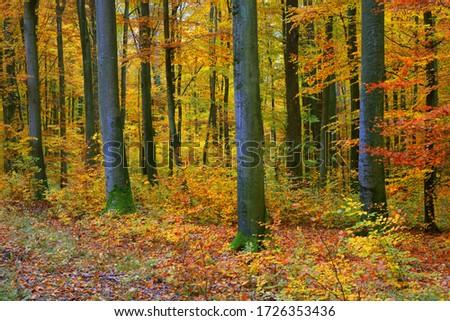 Sáv ősz fa út fedett természet Stock fotó © lypnyk2