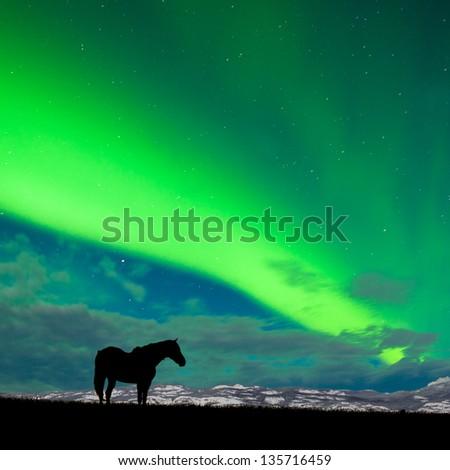 horse and Northern Lights Stock photo © adrenalina