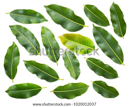 Verde crudo orgánico hortalizas blanco aguacate Foto stock © DenisMArt