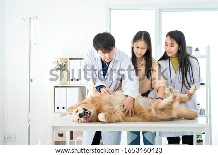 Kutya elvesz törődés sebesült közelkép állatorvos Stock fotó © Kzenon