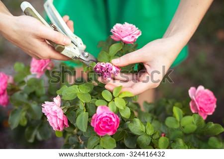 Kert virágok tavasz rózsaszín szirmok virág Stock fotó © susabell