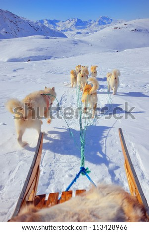 dog sledging in spring time in greenland Stock photo © mady70