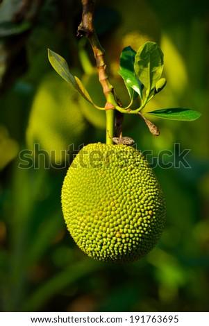 果樹 選択フォーカス テクスチャ ツリー 食品 ストックフォト © galitskaya