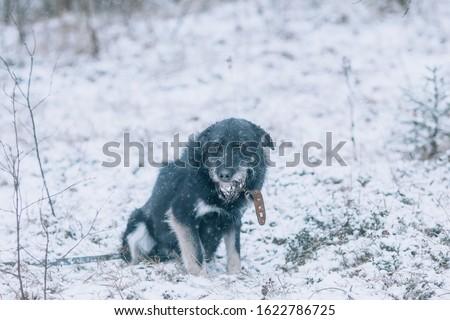 A sad dog stands on the snow Stock photo © olira