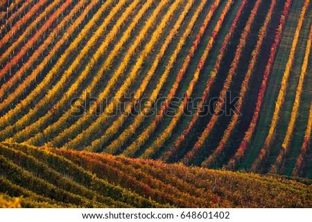 Belo vinha outono paisagem colorido folhas Foto stock © smuki