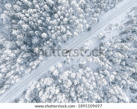 Forest road in winter Stock photo © pictureguy