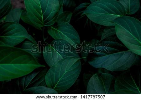 зеленая · трава · капли · воды · Nice · природного · текстуры · трава - Сток-фото © jonnysek