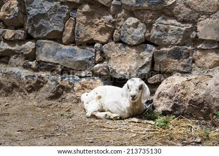 Cordeiro planalto imagem Omã estrada natureza Foto stock © w20er
