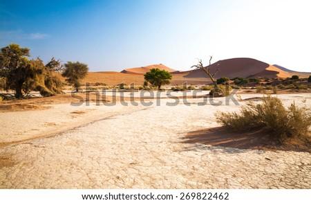 Pustyni krajobraz Namibia drzewo zielone Afryki Zdjęcia stock © dirkr
