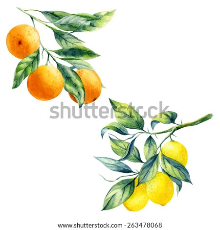 A pack of ripe oranges Stock photo © bluering