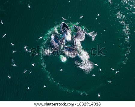 Aerial of shoal. Stock photo © iofoto