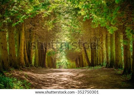 Coniferous park in summer Stock photo © Alex9500