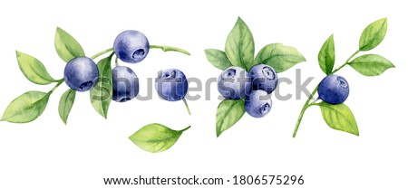 Collection of twigs of wild berries. Forest berry. Sweet fruit. Stock photo © designer_things