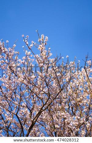 リンゴの木 花 春 庭園 美しい ストックフォト © Anneleven