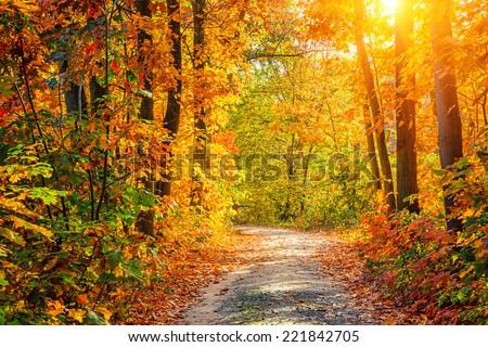 vibrante · caída · follaje · amarillo · dorado · árbol - foto stock © neirfy