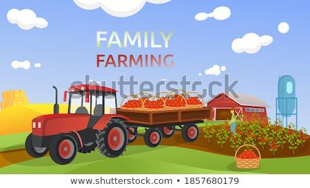 Legumes trator vetor abóbora tomates Foto stock © robuart