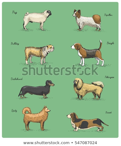 Stockfoto: Border Terrier Dog Breed Cartoon Retro Drawing