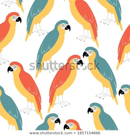 Birds of America- pets and wild birds seamless background Stock photo © shawlinmohd