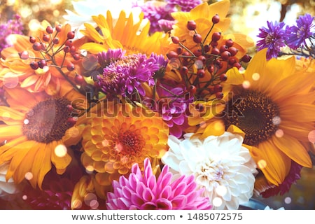 георгин подсолнухи цветы копия пространства саду Солнечный Сток-фото © neirfy