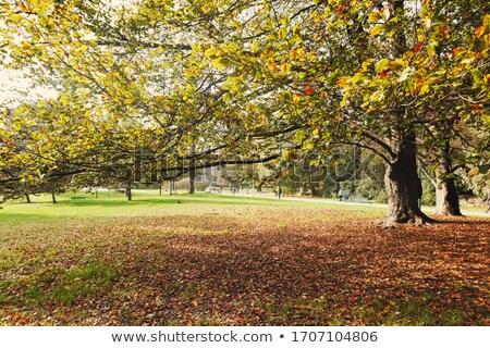 Najaar natuur park vallen bladeren bomen Stockfoto © Anneleven