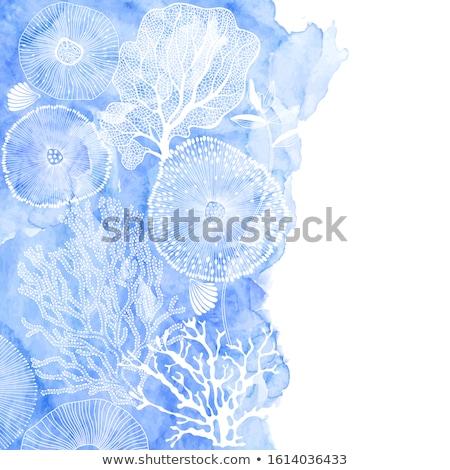 Kwal illustratie mariene vector Blauw Stockfoto © Andrei_