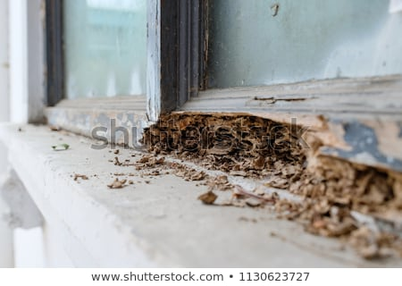 Termite Damage Stock photo © StephanieFrey
