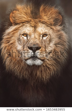 Aslan savan yürüyüş Botsvana gökyüzü Stok fotoğraf © hedrus